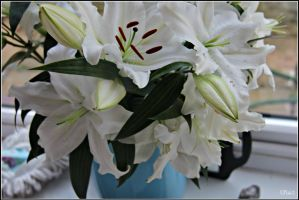 Lillies in Bloom by PhotoTini