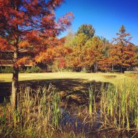 Reed Creek Park 1 by Natures-Studio