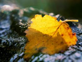 Yellow autumn by little-white-daisy