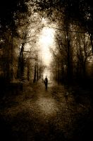 Lost in the woods by vajkarious