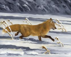 On The Run - Red Fox by HOULY1970