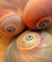 Sensual Shells by Yvon-novY