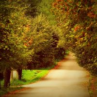 autumn path by SvitakovaEva