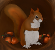 Pine Squirrel by oonami