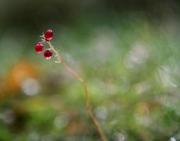 little thing by KariLiimatainen