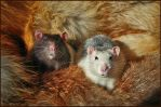 Fabulous rats by Triumfa