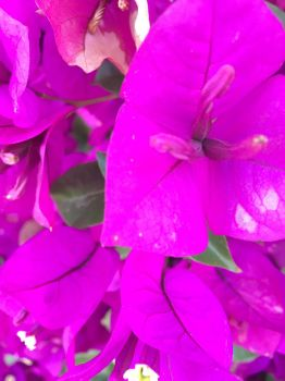 PurpleThorn Pictures: Flowers by PurpleThorne
