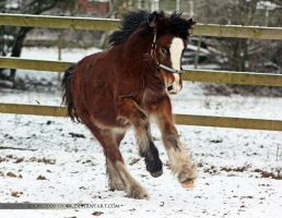 bay filly - stock by s-uperflu0us