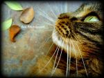 My cat. by Viviiiiiiii