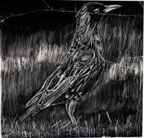 Bird Scratch Art by Ambercatlucky2