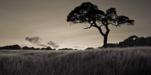 Lone Tree by SewerRar