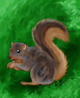 Squirrel Gift by lucidcoyote