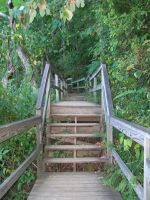 Wooded Stairs by seiyastock