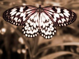 Sepia Butterfly by MichelLalonde