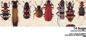 scans_bugs by horizonroad