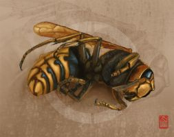The Wasp by steeldolphin