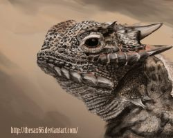 Horned Lizard by TheSax66