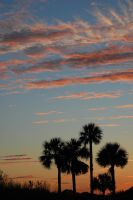 Sunset, Clouds and Palm Trees by ardyandkari
