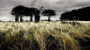 Richmond Park by Andrew-and-Seven