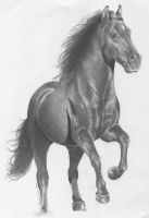 Andalusian by Ryerd