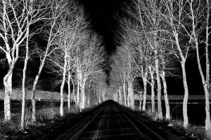 black road by augenweide