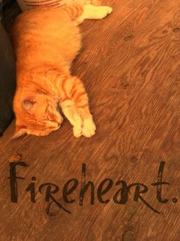 Fireheart. (Warrior Cats) by froyo11