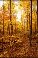 Fall in the woods by Jack-Nobre