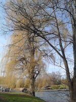 Trees Along the Lake by SirDNA109