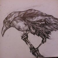 Pen Drawing of a crow. by MeWhoMoo
