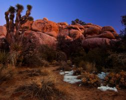 Last Light, Joshua Tree by shubat
