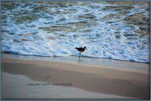 Long legged Sandpiper... by LadyAliceofOz
