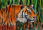 Tiger in water by LenaZLair