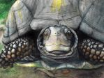 Realistic Turtle Painting by Rachet777