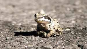 Little frog by Jonas-Daehnert