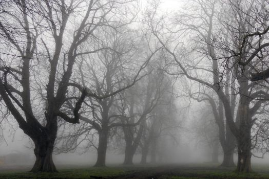 Trees in Mist by mikelux