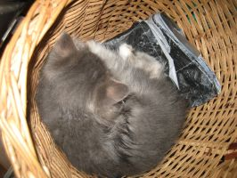 Kitten in a basket by DimiTriaNInquisitor