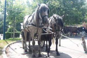 Cart Horses 03 by Stock-gallery
