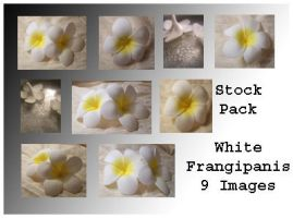 Stock Pack - Frangipanis by Gracies-Stock