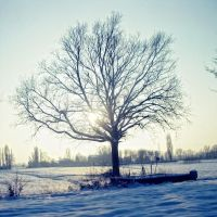 sun and snow by krylty