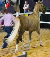 STOCK - 2014 Total Equine Expo-92 by fillyrox