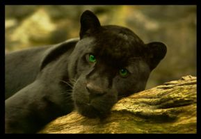 black puma 4 by unucatine