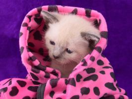 kitty wrap by hoschie