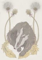 Dandelion Badger by NicolaWallace