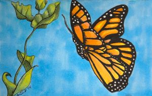 Butterfly card by hydraa