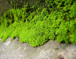 -moss stock- by Anotheroutsider