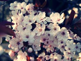 Tree Blossom by KerrieLBrown