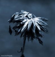The loosening springs of time by LordLJCornellPhotos