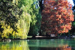 Autumn Colours in Rome by dcheeky