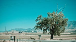 Crossroad Tree by PapaGue