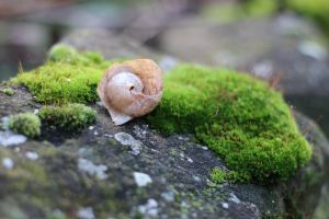 Moss Stock 02 by Malleni-Stock